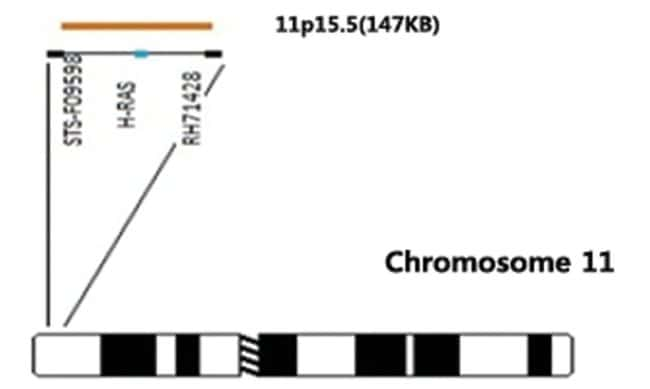 Abnova HRAS/CEN11p (Orange/Green) FISH Probe HRAS/CEN11p FISH Probe:Life