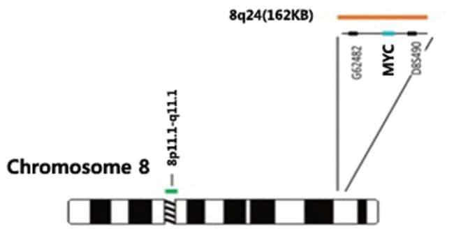 Abnova MYC/CEN8q (Orange/Green) FISH Probe MYC/CEN8q FISH Probe:Life Sciences