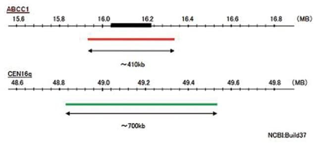 Abnova ABCC1/CEN16q (Texas Red/FITC) FISH Probe ABCC1/CEN16q FISH Probe:Life