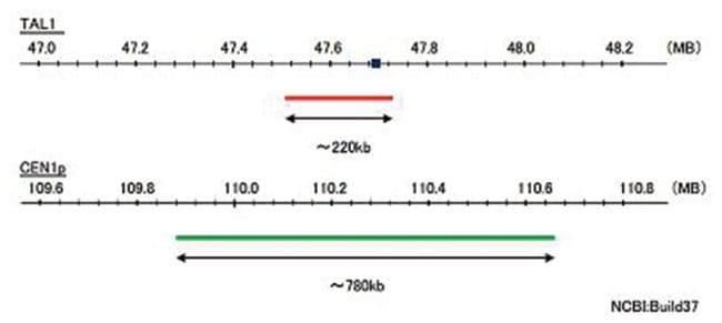 Abnova™TAL1/CEN1p (Texas Red/FITC) FISH-Sonde TAL1/CEN1p FISH-Sonde Abnova™TAL1/CEN1p (Texas Red/FITC) FISH-Sonde
