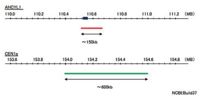 Abnova AHCYL1/CEN1q (Texas Red/FITC) FISH Probe AHCYL1/CEN1q FISH Probe:Life