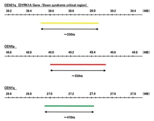Abnova 3-Color FISH Probe (chromosome 21, X and Y) 100uL; Probe 1: CEN21q,