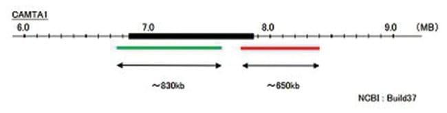 Abnova™CAMTA1 (Texas Red/FITC) Split FISH Probe 100 μL Abnova™CAMTA1 (Texas Red/FITC) Split FISH Probe