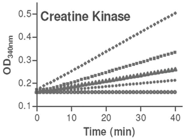 Abnova Creatine Kinase Assay Kit 1 Kit:Life Sciences