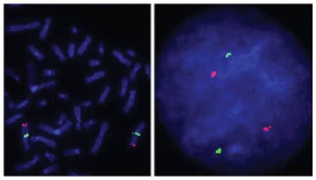 Abnova™SOX2/CEN3q FISH-Sonde Quelle: Genomische DNA Abnova™SOX2/CEN3q FISH-Sonde