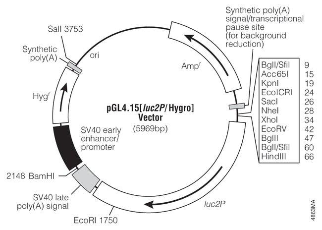 Promega pGL4 Luciferase Reporter Vectors:Life Sciences:Molecular Biology
