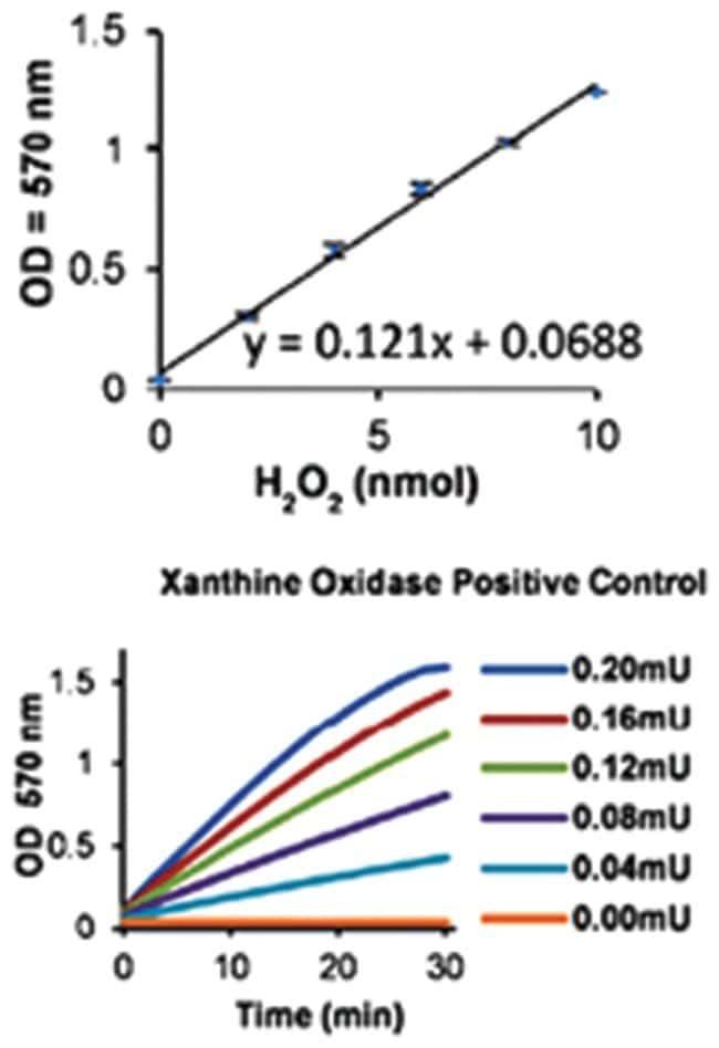 Abnova Xanthine Oxidase Assay Kit 1 Kit:Life Sciences