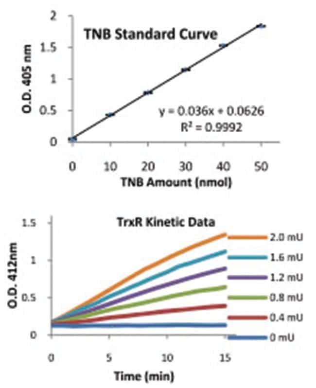 Abnova Thioredoxin Reductase Assay Kit 1 Kit:Life Sciences