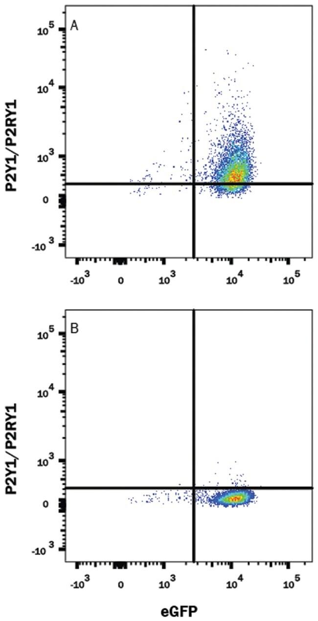 P2Y1/P2RY1 Mouse anti-Human, Alexa Fluor 647, Clone-479509, R 25 Tests;