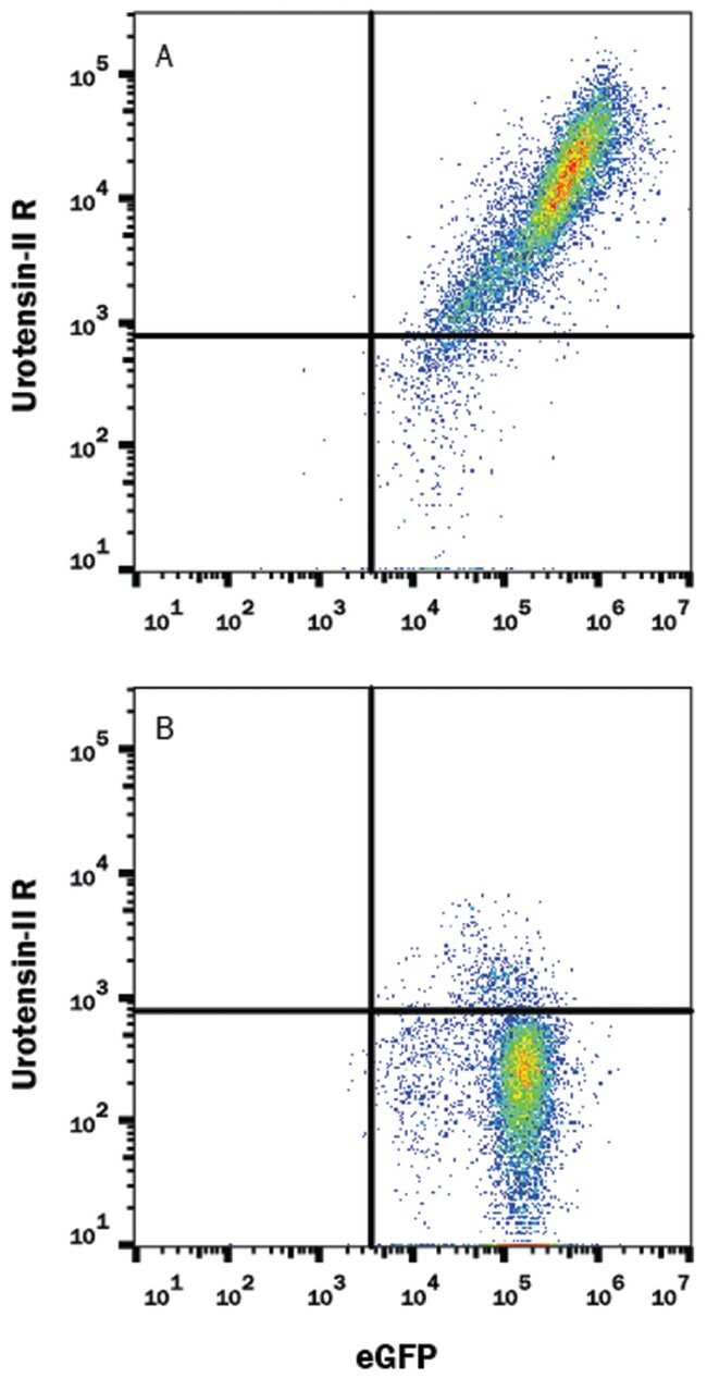 Urotensin-II R/GPR14 Rat anti-Mouse, Alexa Fluor 647, Clone-443707, RD