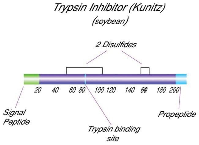 Trypsin inhibitor, MP Biomedicals™