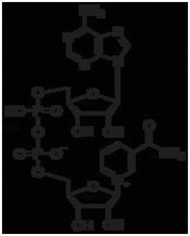 MP Biomedicals -Nicotinamide Adenine Dinucleotide, Oxidized, MP Biomedicals:Life