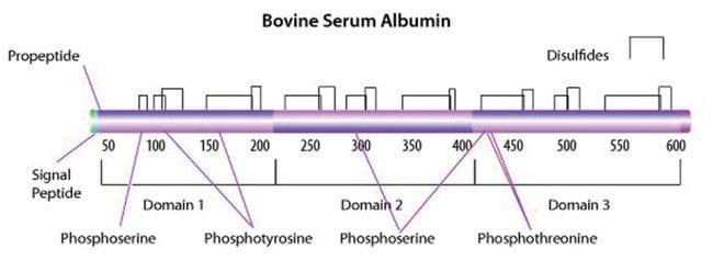 MP Biomedicals Albumin 35% Solution 50mL:Life Sciences