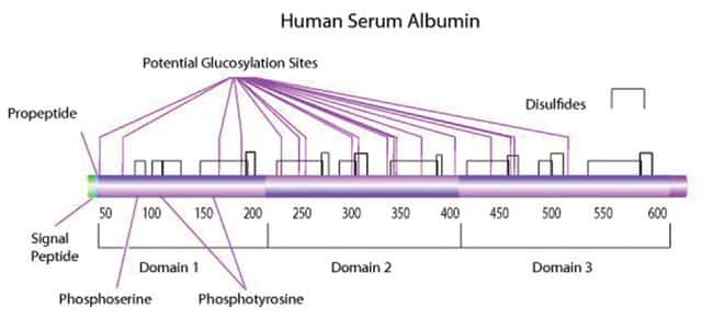 Albumin, Human, Fraction V Protease, HRP, and AP Free, 10g, MP Biomedicals