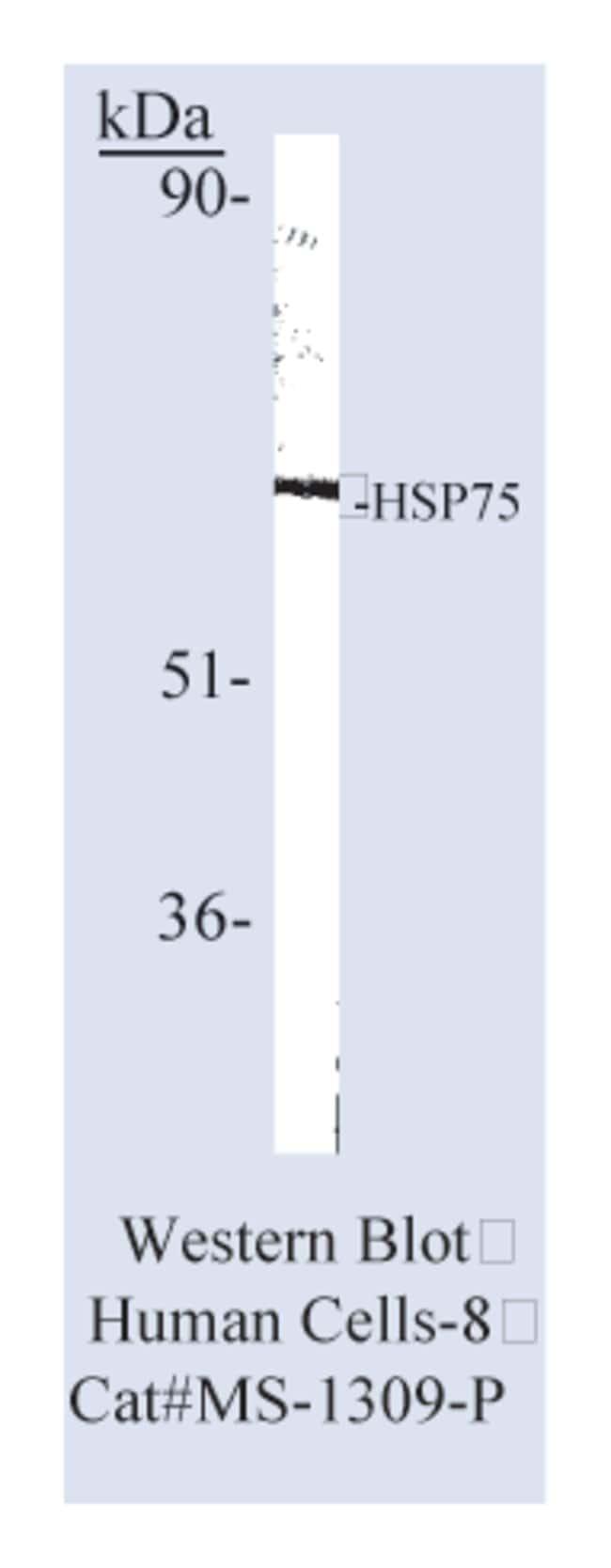 anti-Heat Shock Protein 75/HSP75/ TRAP-1 Ab-2, Clone: TR-1A, Thermo Scientific