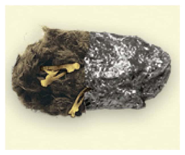 Deluxe Owl Pellet Kit