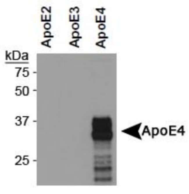 anti-ApoE4, Clone: 4E4, Novus Biologicals 0.025mL; Unlabeled:Life Sciences