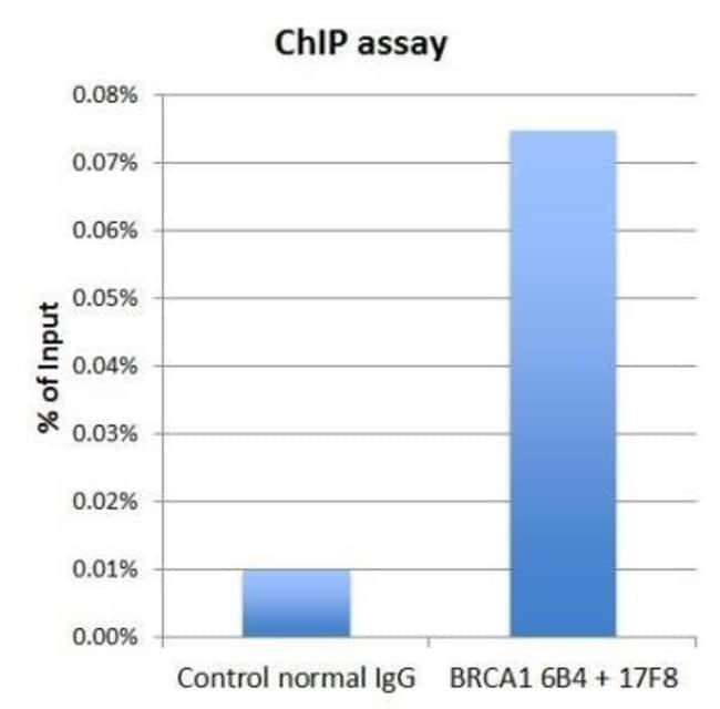 anti-BRCA1, Clone: 17F8, Novus Biologicals 0.1mg; Unlabeled:Life Sciences