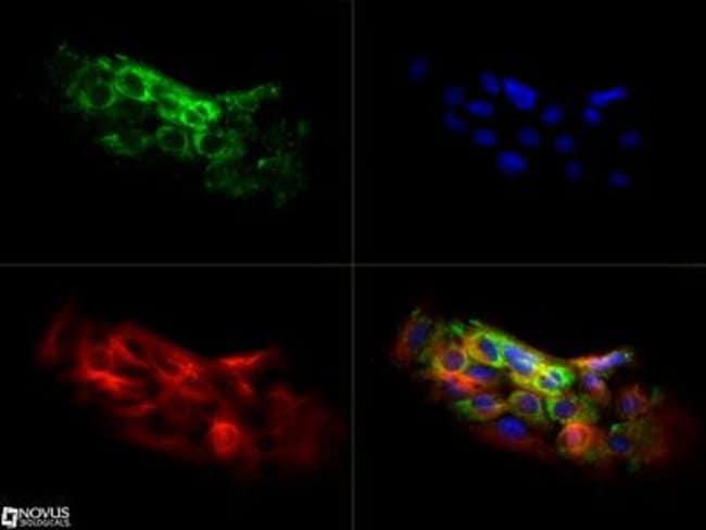 anti-CARD12, Polyclonal, Novus Biologicals 0.025mL; Unlabeled:Life Sciences