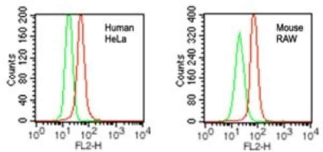 anti-DDB1, Polyclonal, Novus Biologicals:Antibodies:Primary Antibodies