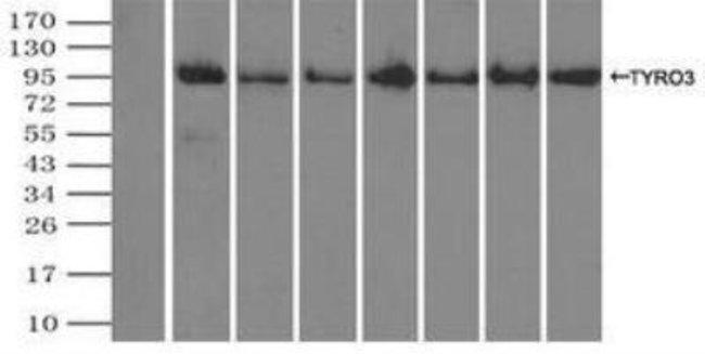 anti-Dtk/TYRO3, Clone: 2C4, Novus Biologicals 0.1mL; Unlabeled:Life Sciences