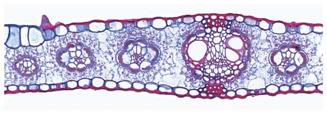 Prepared Individual Microscope Slides:Education Supplies:Biology and Biotechnology