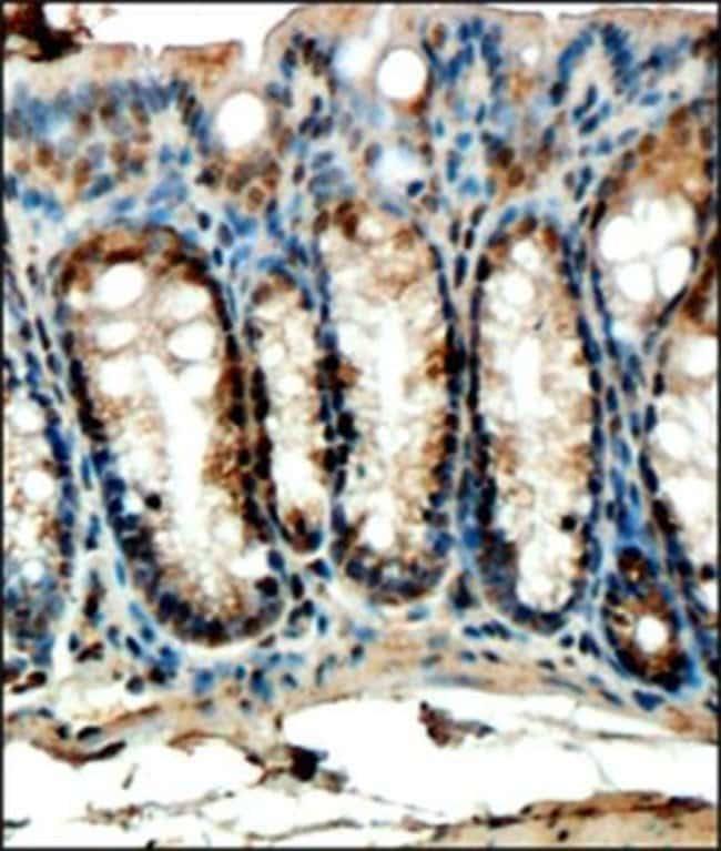 anti-FFAR4/GPR120, Polyclonal, Novus Biologicals:Antibodies:Primary Antibodies