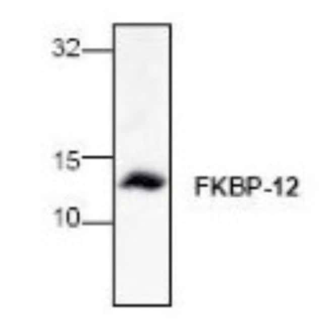 anti-FKBP12, Polyclonal, Novus Biologicals 0.1mg; Unlabeled:Life Sciences