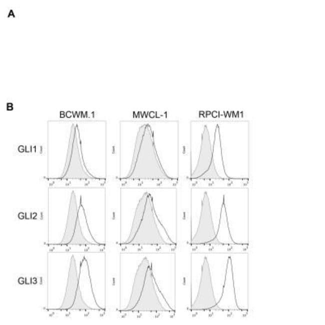 anti-GLI-1, Polyclonal, Novus Biologicals:Antibodies:Primary Antibodies