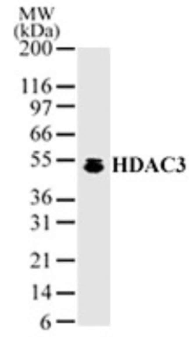 anti-HDAC3, Polyclonal, Novus Biologicals:Antibodies:Primary Antibodies