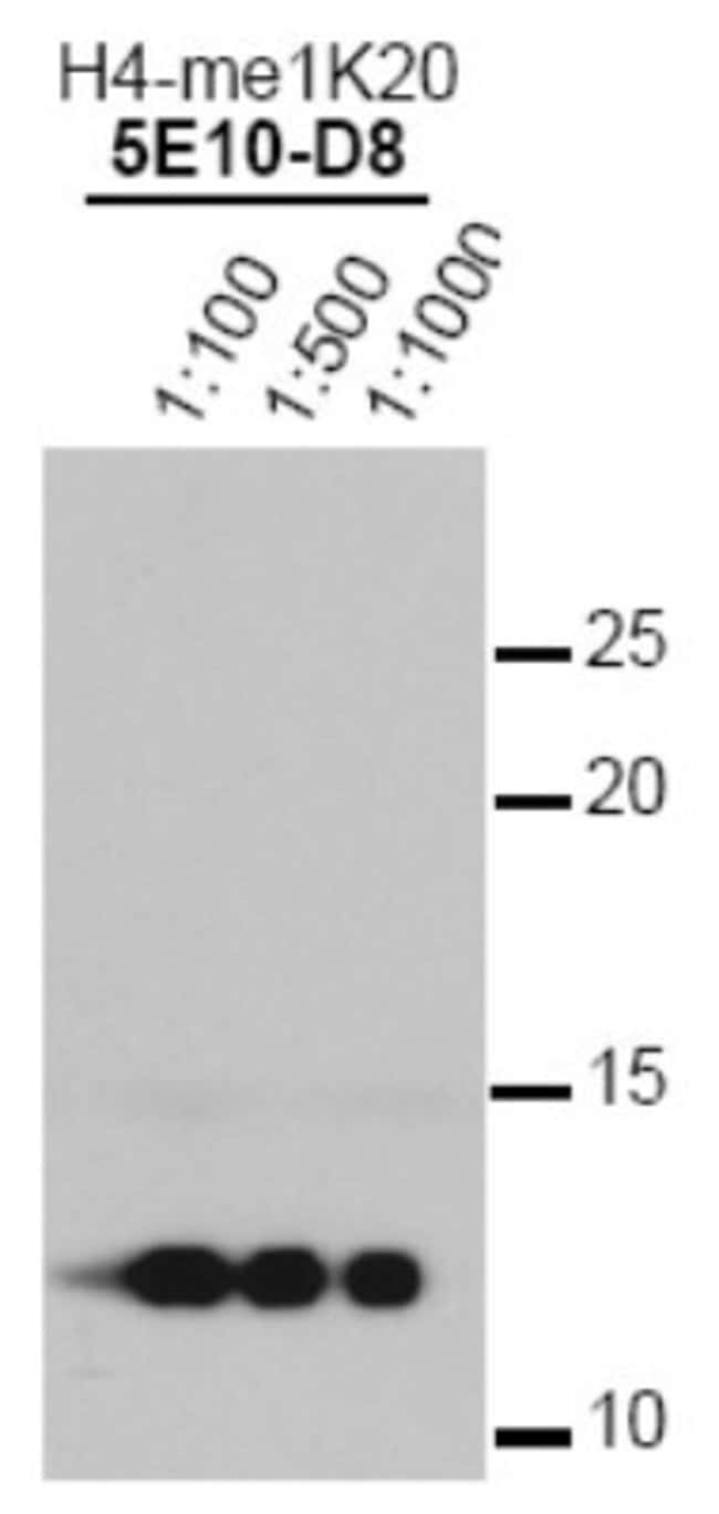 anti-Histone H4 (Monomethyl Lys20), Clone: 5E10-D8, Novus Biologicals 0.025mL;