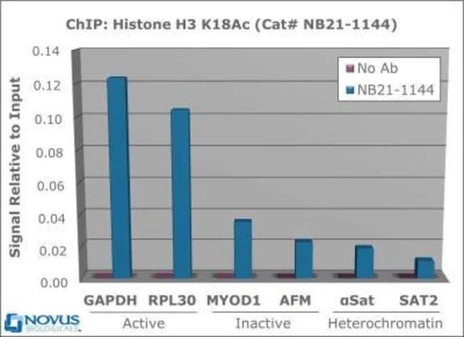 anti-Histone H3 (ac Lys18), Polyclonal, Novus Biologicals:Antibodies:Primary
