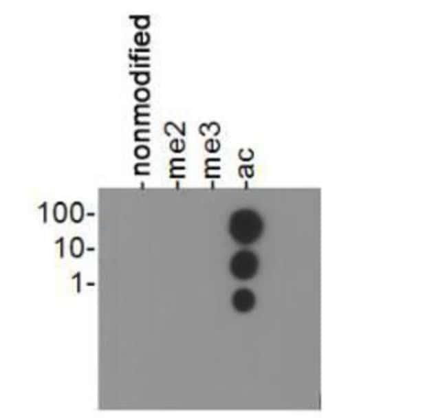 anti-Histone H3 (ac Lys23), Polyclonal, Novus Biologicals:Antibodies:Primary