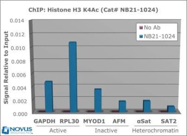 anti-Histone H3 (ac Lys4), Polyclonal, Novus Biologicals:Antibodies:Primary