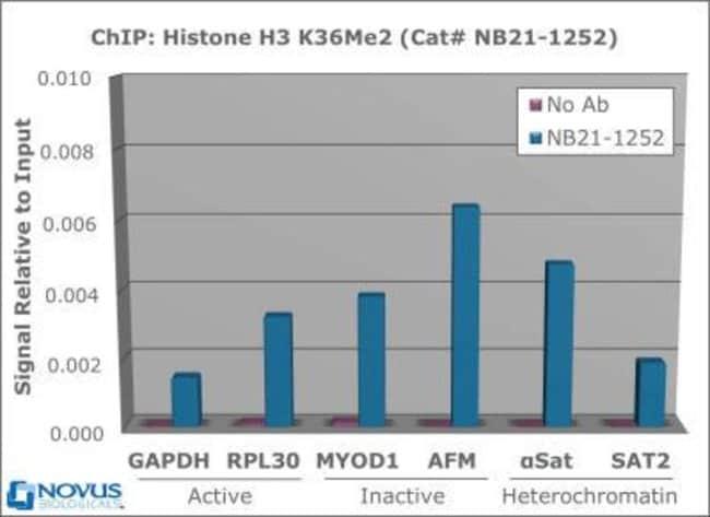 anti-Histone H3 (Dimethyl Lys36), Polyclonal, Novus Biologicals:Antibodies:Primary