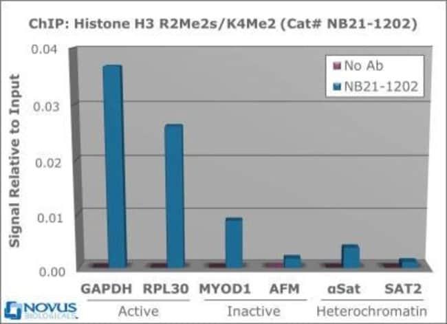 anti-Histone H3 (Dimethyl Lys4, Sym-dimethyl Arg2), Polyclonal, Novus Biologicals:Antibodies:Primary