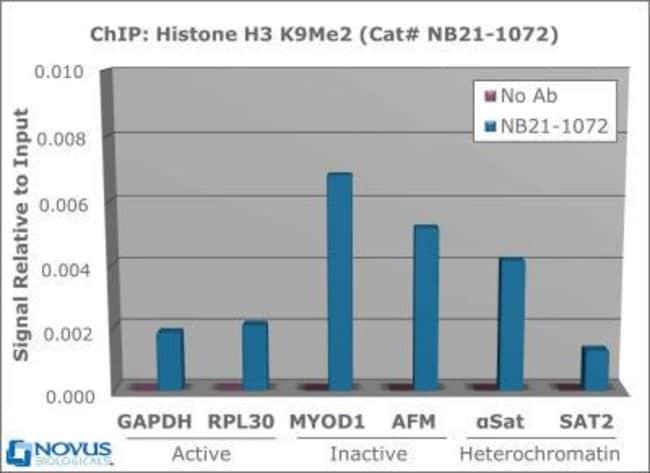 anti-Histone H3 (Dimethyl Lys9), Polyclonal, Novus Biologicals:Antibodies:Primary