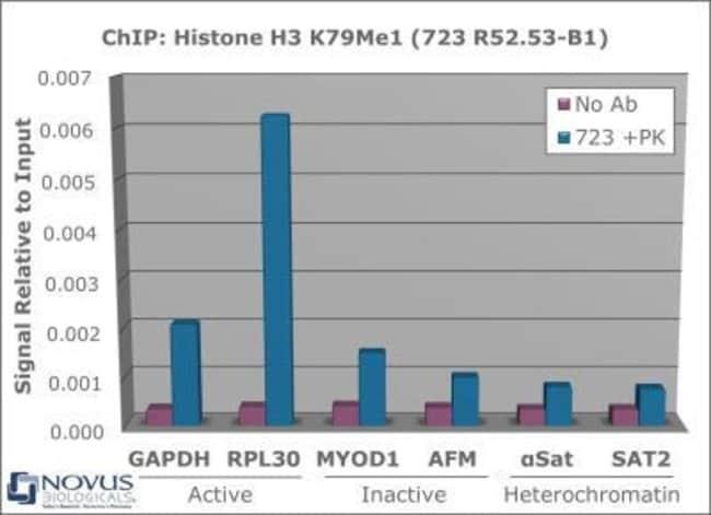 anti-Histone H3 (Monomethyl Lys79), Polyclonal, Novus Biologicals:Antibodies:Primary