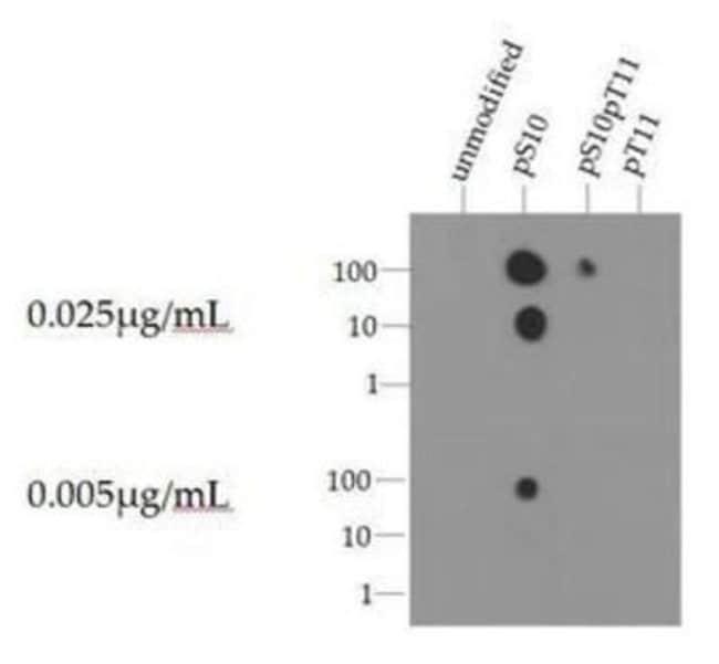 anti-Histone H3 (p Ser10), Polyclonal, Novus Biologicals:Antibodies:Primary