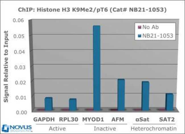 anti-Histone H3 (p Thr6, Dimethyl Lys9), Polyclonal, Novus Biologicals:Antibodies:Primary