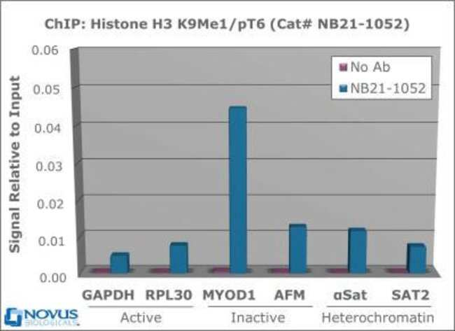 anti-Histone H3 (p Thr6, Monomethyl Lys9), Polyclonal, Novus Biologicals:Antibodies:Primary