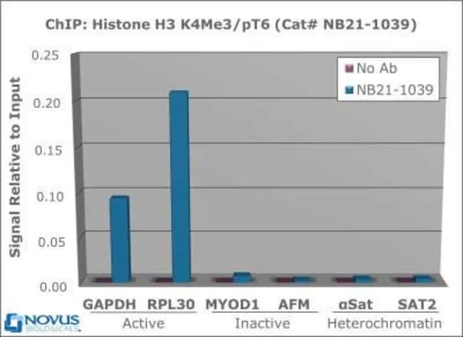 anti-Histone H3 (p Thr6, Trimethyl Lys4), Polyclonal, Novus Biologicals:Antibodies:Primary