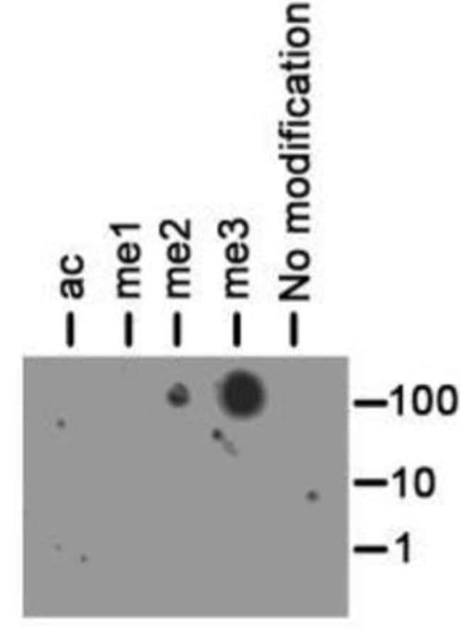 anti-Histone H3 (Trimethyl Lys56), Polyclonal, Novus Biologicals:Antibodies:Primary