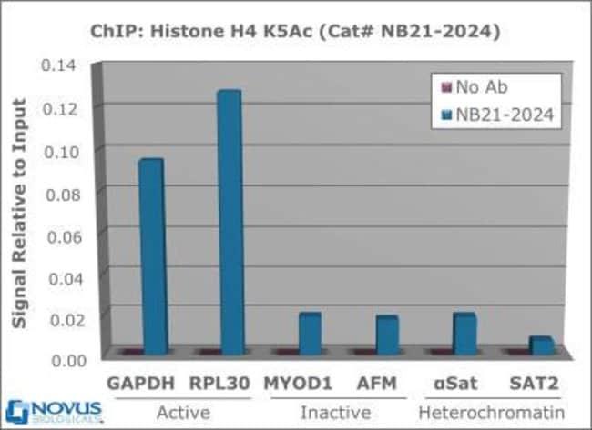 anti-Histone H4 (ac Lys5), Polyclonal, Novus Biologicals:Antibodies:Primary