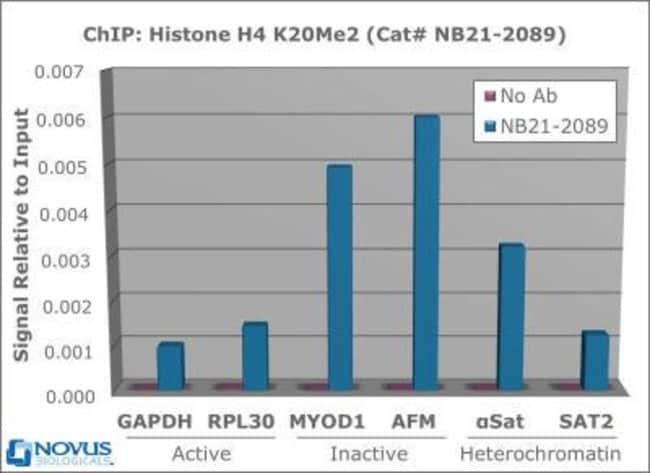 anti-Histone H4 (Dimethyl Lys20), Polyclonal, Novus Biologicals:Antibodies:Primary