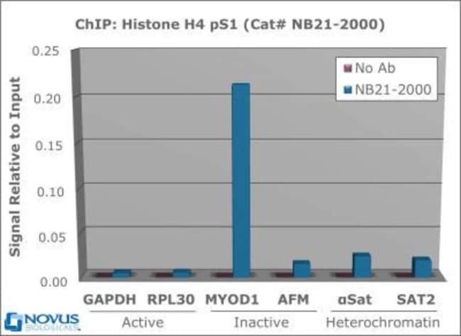 anti-Histone H4 (p Ser1), Polyclonal, Novus Biologicals:Antibodies:Primary
