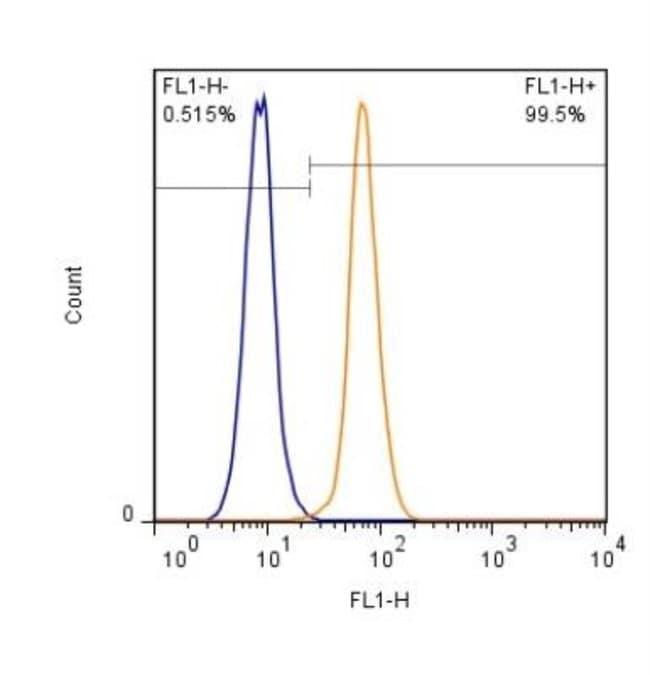 anti-HP1 alpha, Polyclonal, Novus Biologicals:Antibodies:Primary Antibodies