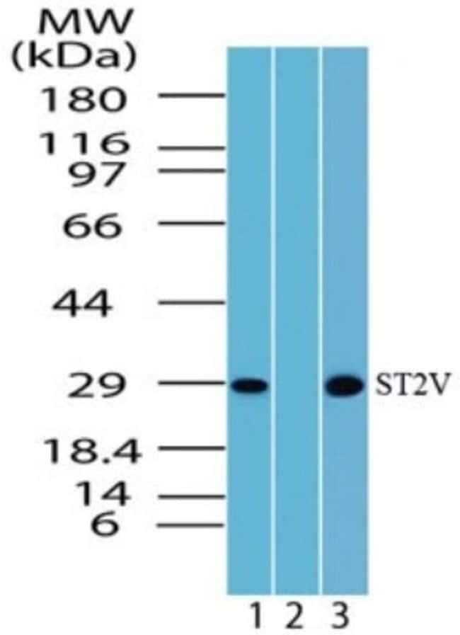 anti-IL1RL1, Polyclonal, Novus Biologicals:Antibodies:Primary Antibodies
