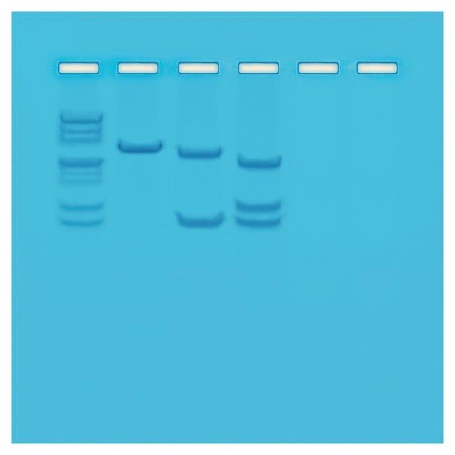 Edvotek 105-C Mapping of Restriction Sites on Plasmid DNA for 24 Gels