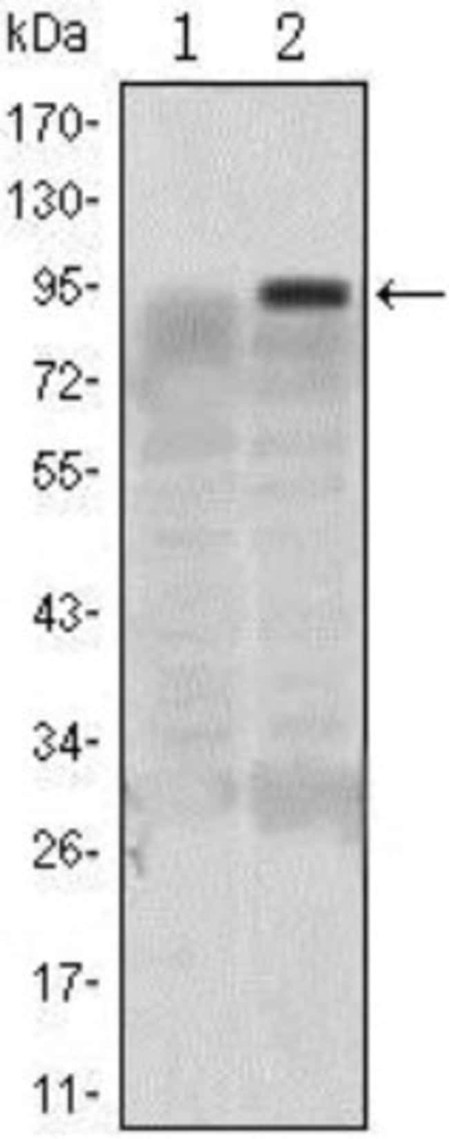 anti-KLF4, Clone: 1E6, Novus Biologicals 0.1mL; Unlabeled:Life Sciences